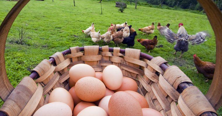 Derribando el mito sobre el huevo